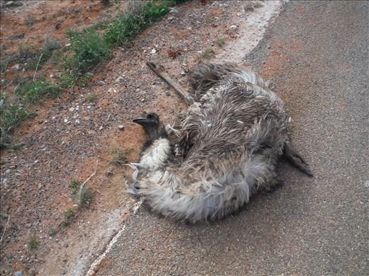 RIP emu.