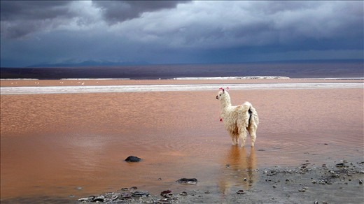 Red Lake near the border of Bolivia and Chile.