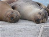 those two we found at the harbour of Floreana: by aj, Views[418]