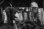 These two workers were in a hurry to finish their job in the packing area. The t: by aklanon, Views[187]