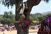 Wainting for a new kermesse, Pushkar: by alessia, Views[202]