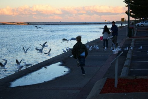 Chasing the seagulls