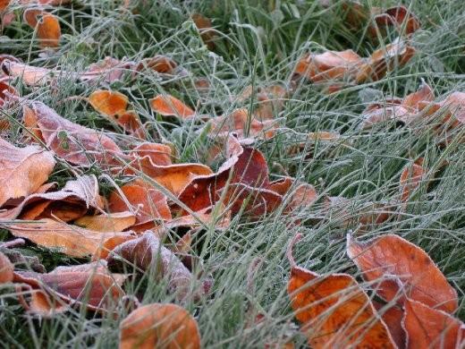 Autumn Frosts