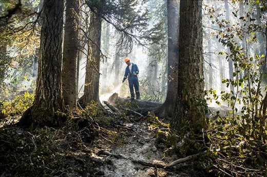 A sub contracted forest firefighter puts out the final flames of a once huge fire