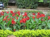 Flowers of Lalbagh Gardens: by alexbg, Views[204]