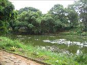 Lotus Pond: by alexbg, Views[216]