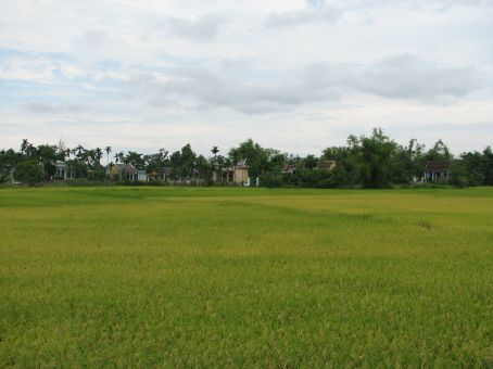 I love the different hues of the rice fields, blowing gently in the wind :)