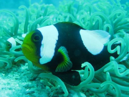 This fish looks miserable, it could do with cheering up.