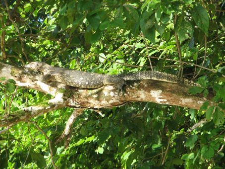 Another monitor lizard...i'm bored of these now, i want crocodiles!