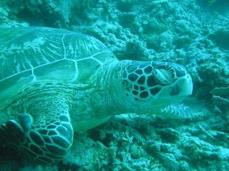 A sleeping turtle  :)