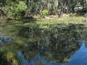 Can you see any platypus?: by all_powered_up, Views[625]