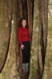 inside a strangler tree: by alleen, Views[231]