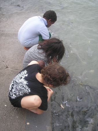 Feeding the fish in Darwin. Fun!