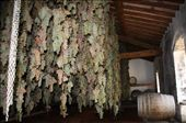 Drying the grapes to make Vinsanta their dessert wine: by almost_italian, Views[241]
