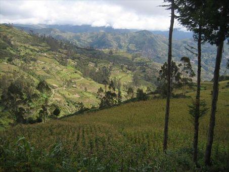 The agriculture around Sorata.