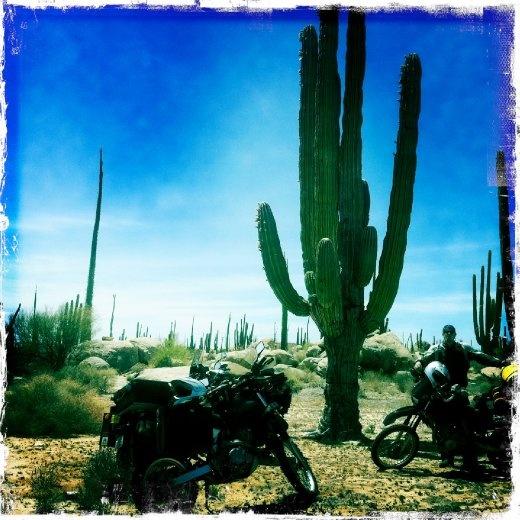 Cacti in the high desert.
