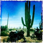 Cacti in the high desert.: by alpiner84, Views[1863]