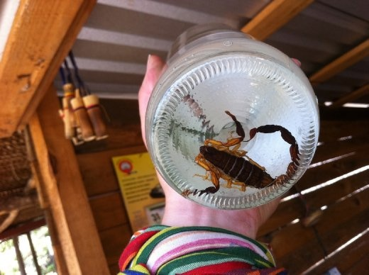 Scorpion sacrifice at the bottom of a mezal bottle. Yummy.