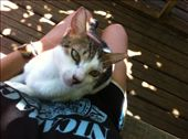 Meet Crazy Legs, my favorite cat on the island...: by alpiner84, Views[721]