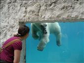 Jess and the polar bear at the zoo. That polar bear was so fun and social (but it could kill me in one swipe). : by alysandjess, Views[249]