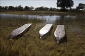 Mokoro - a traditional Delta canoe: by alysons, Views[289]