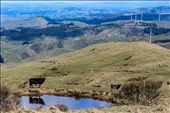 Palmerston North Mountain: by amberkiwi, Views[136]
