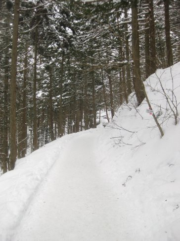 The snowy path to Jigokudani Yaen-koen (Monkey Park), Nagano prefecture.
