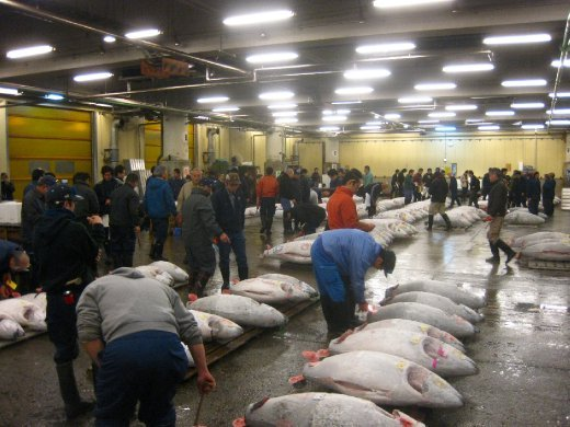 Tuna auction, Tsukiji Fish Market