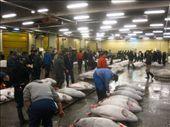 Tuna auction, Tsukiji Fish Market: by amy_palfreyman, Views[412]