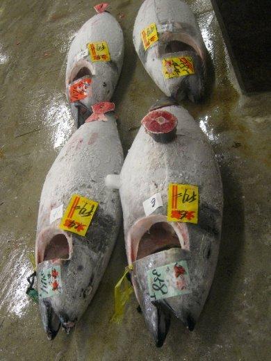 Tuna auction, Tsukiji Fish Market
