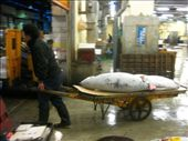 Tuna auction, Tsukiji Fish Market: by amy_palfreyman, Views[273]