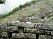 Andean Rabbits!: by amyaaron, Views[929]