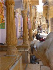 Street in Jaisalmer.: by amytaylor, Views[135]