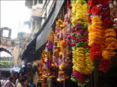 Garlands for sale at the market in Bundi for a festival that night. : by amytaylor, Views[208]