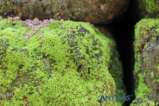 A carpet Mosses of growing on a block