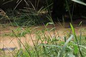 Swaying weeds in the wind: by anders, Views[380]