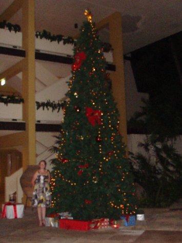 The Hayman Christmas Tree.