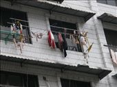 It's common to meat and sausages out to dry in China. This person in Guilin lived on the 5th floor and hung their meat out with the washing.: by andylillicrap, Views[219]