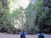 ..........this was on the other side of the cave.  Mangrove trees, mud skippers, and fiddler crabs.: by anealis314, Views[186]