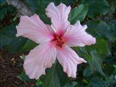 ... bloem....: by angelahirs, Views[218]