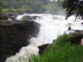murchison falls, if you fell in you'd never come out!: by angeline, Views[306]