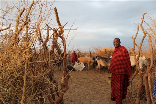 Sunrise with the Masai  as they do a morning head count of their animals in the boma.