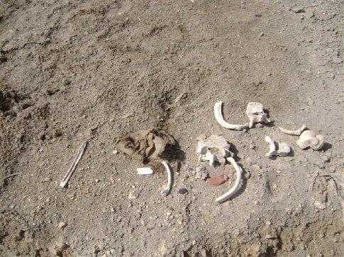 Bones laying around El Brujo...just everywhere...