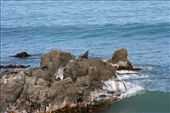 Seal colony on the Pacific coast north of Kaikoura: by anijensen, Views[117]