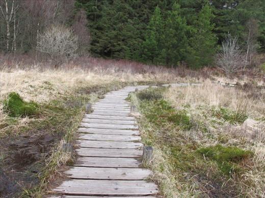 Wooden walkway through the marsh, Wales