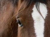 The soul of a horse can be seen through his eyes.: by anna-k, Views[182]