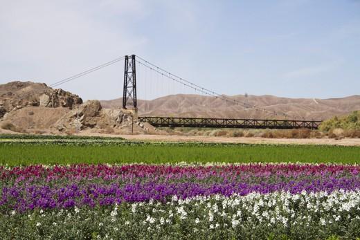 McPhaul Swinging Bridge, also known as the 'Bridge to nowhere, 'Yuma