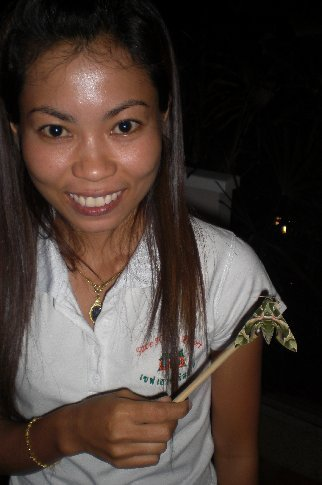 Thai staff - brought us a butterfly - it was just clinging to the stick