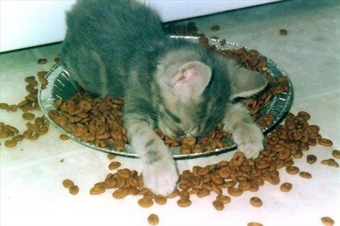 kitten asleep in her food