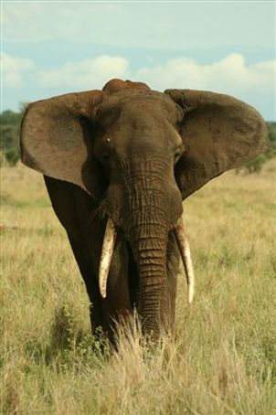 Why hello Mr Elephant